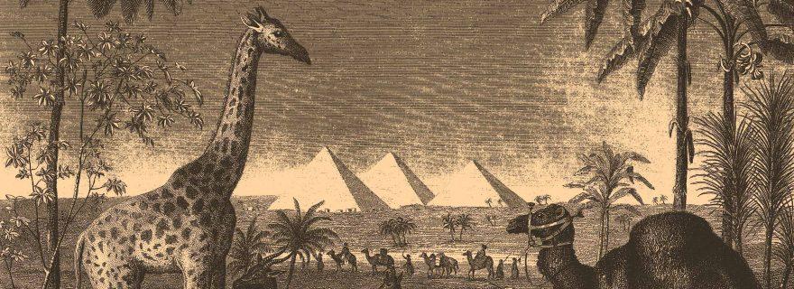Een hapje giraffenbout