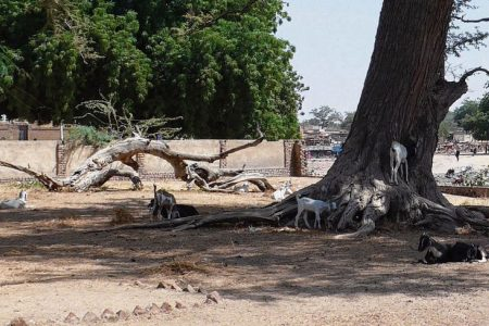 Kubkub: Hoe religieuze verdeling in Tsjaad de lens op het verleden bepaalt
